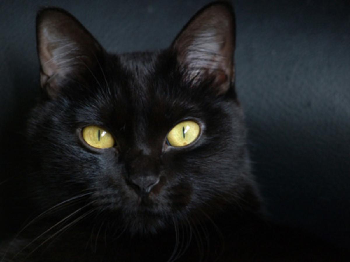 superstitionbd