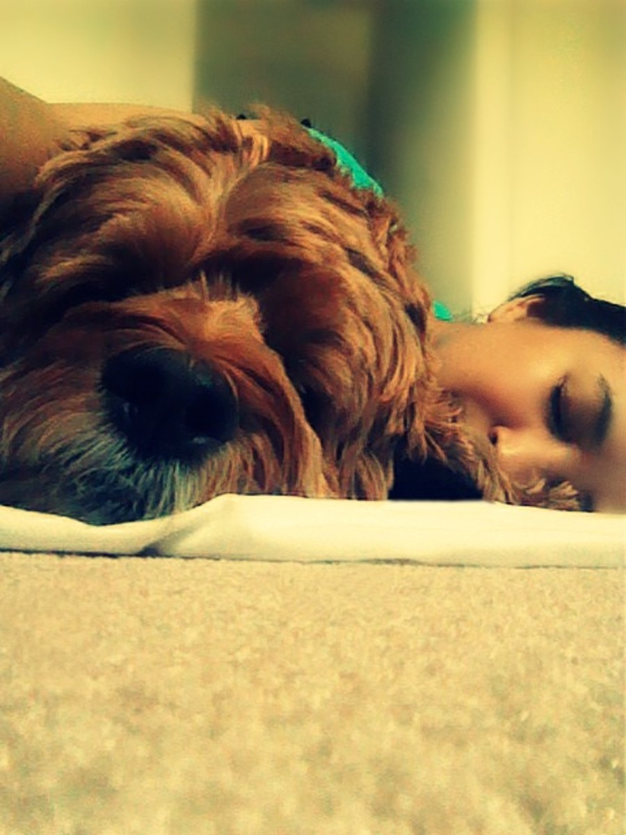 My dog and I had a good nap time.