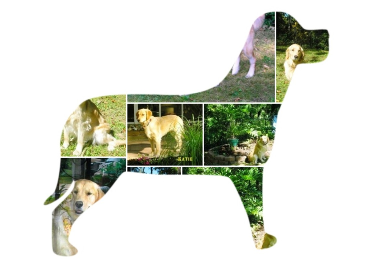 Shape Collage - My Dog