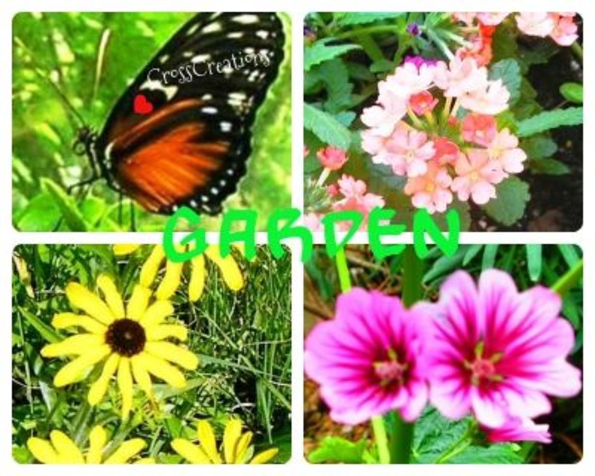 Groovy Garden Images Collage