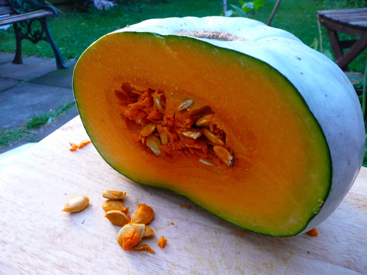 With its dense flesh, this pumpkin is ideal for baking.