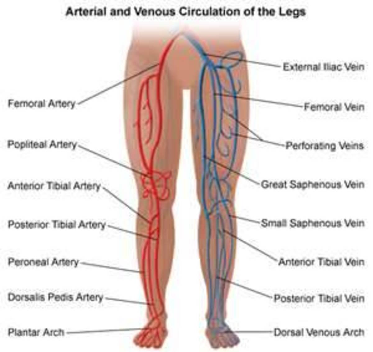 What causes the pain in my legs and how can I prevent it?