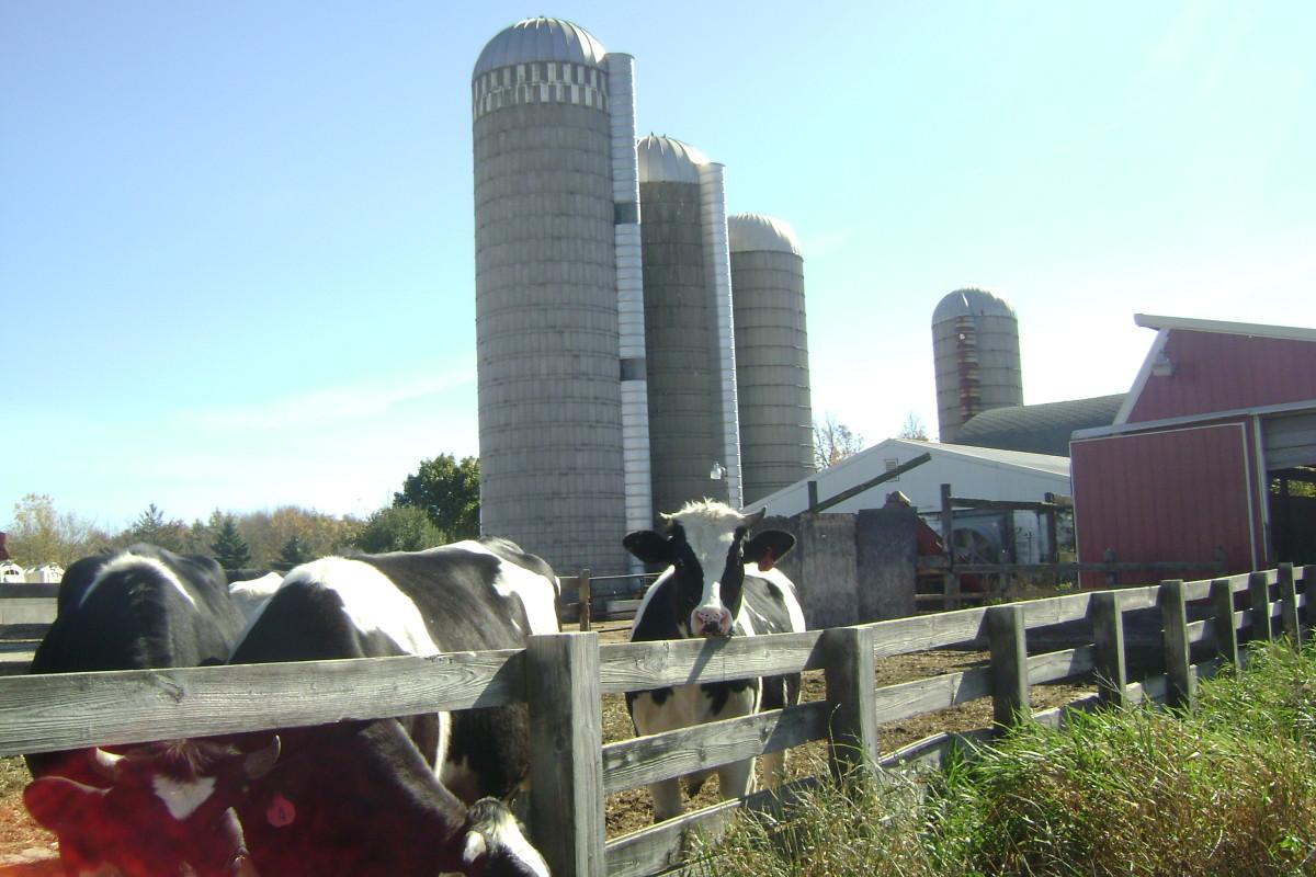 My sister's dairy farm