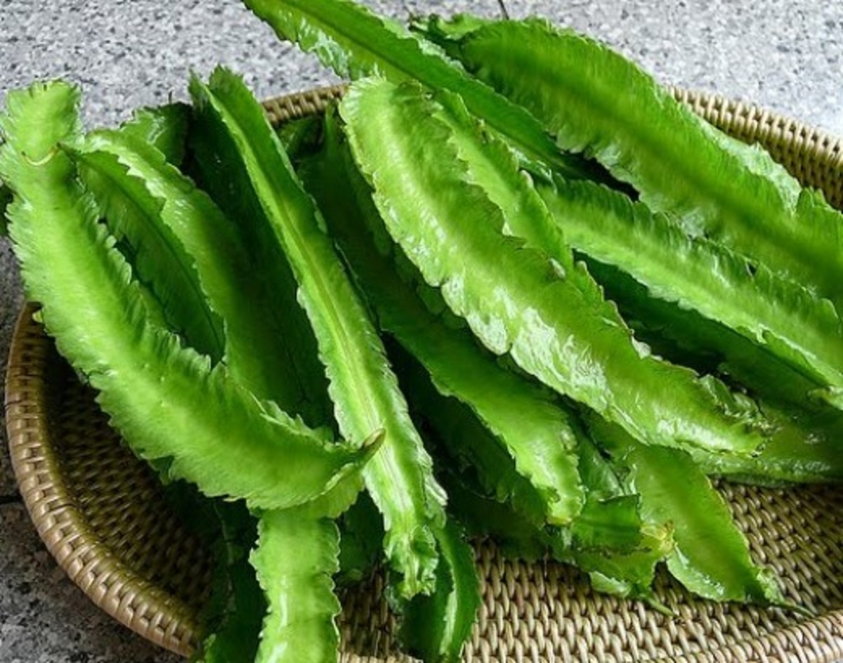 Sigarilyas (winged bean)