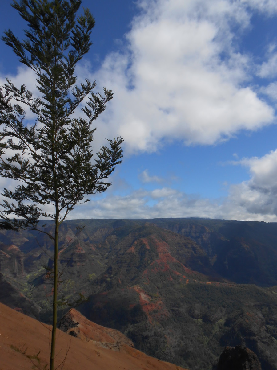 Waimea Canyon on the island of Kauai.