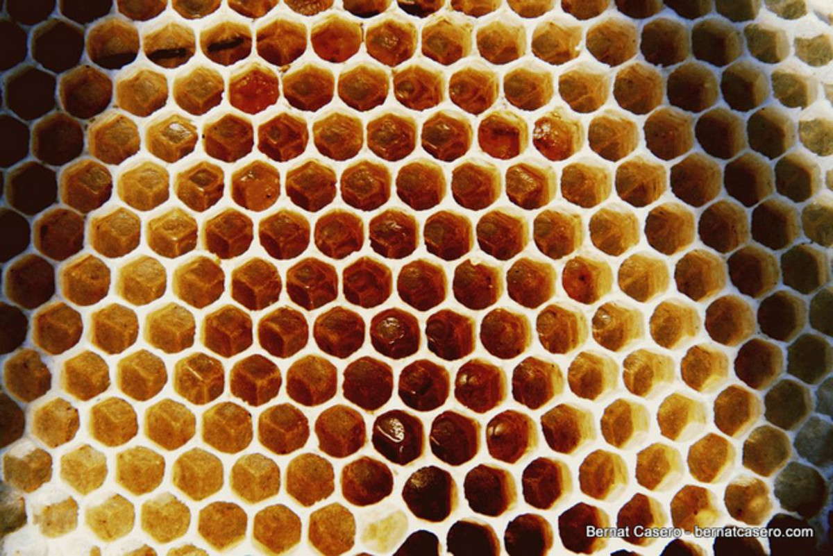 Beehive's are penultimate symbols of productive work