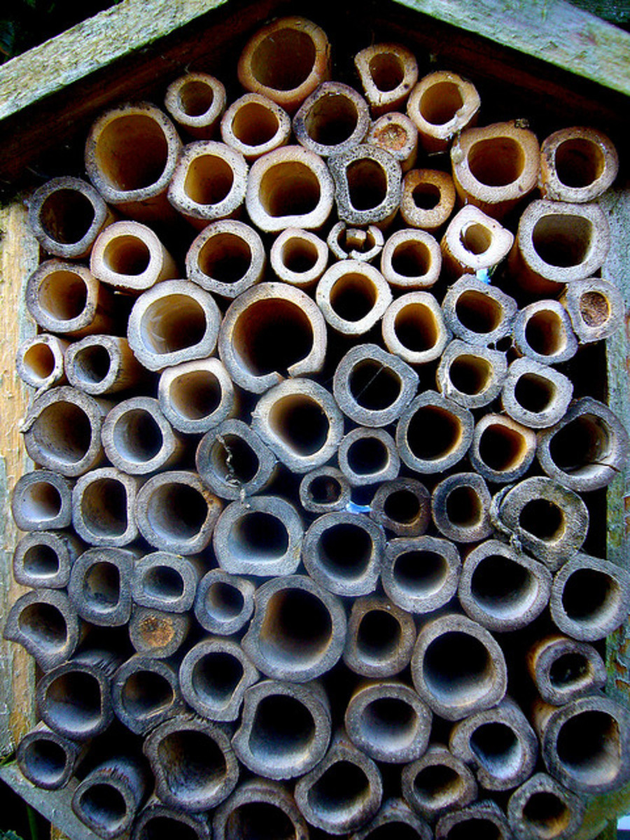 A different kind of bee house--a bamboo bee box
