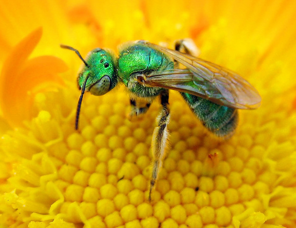 Watch your mouth!  Foul language might solicit this bee's sting.