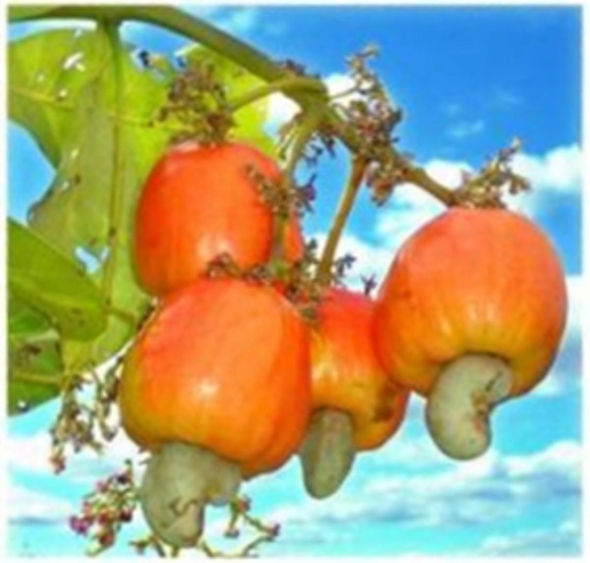 larabars-with-cashews-and-dates