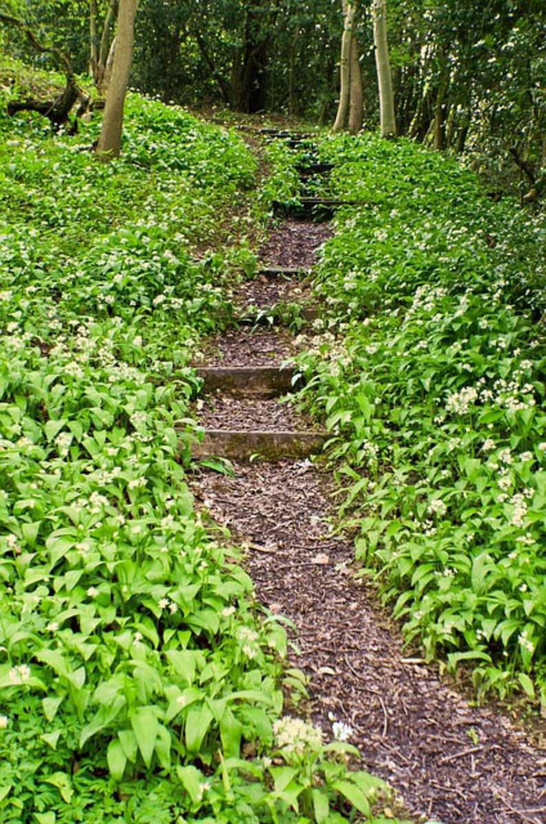 The Wiccan Path?