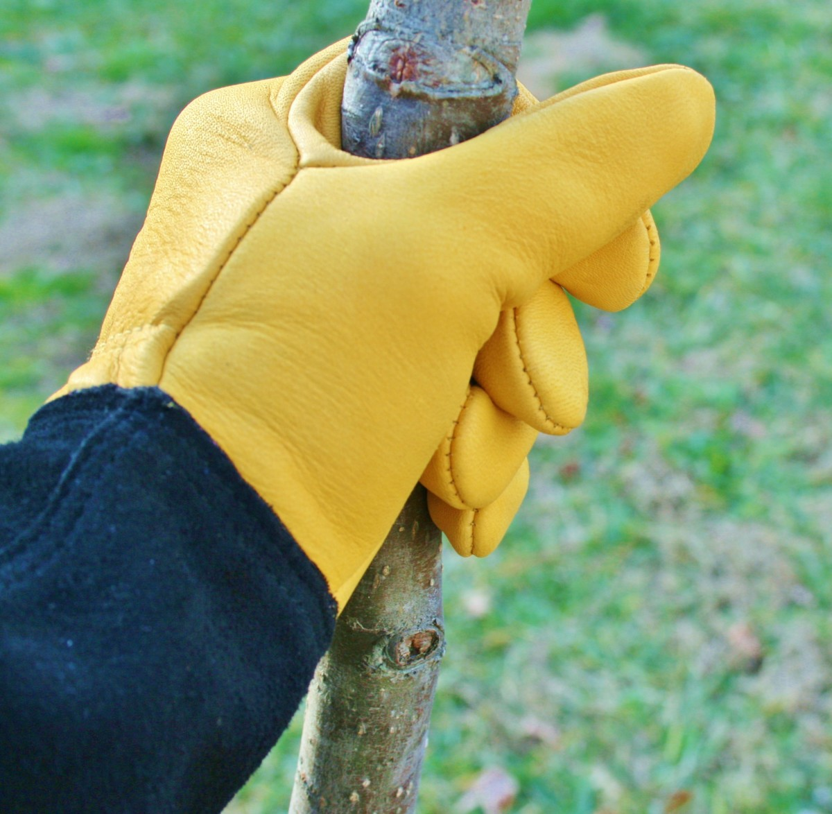 The Best Cold-Weather Garden Gloves