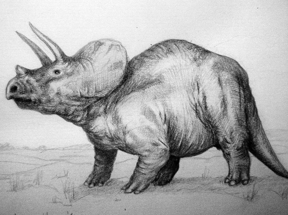 The Difference Between the Triceratops and Avaceratops