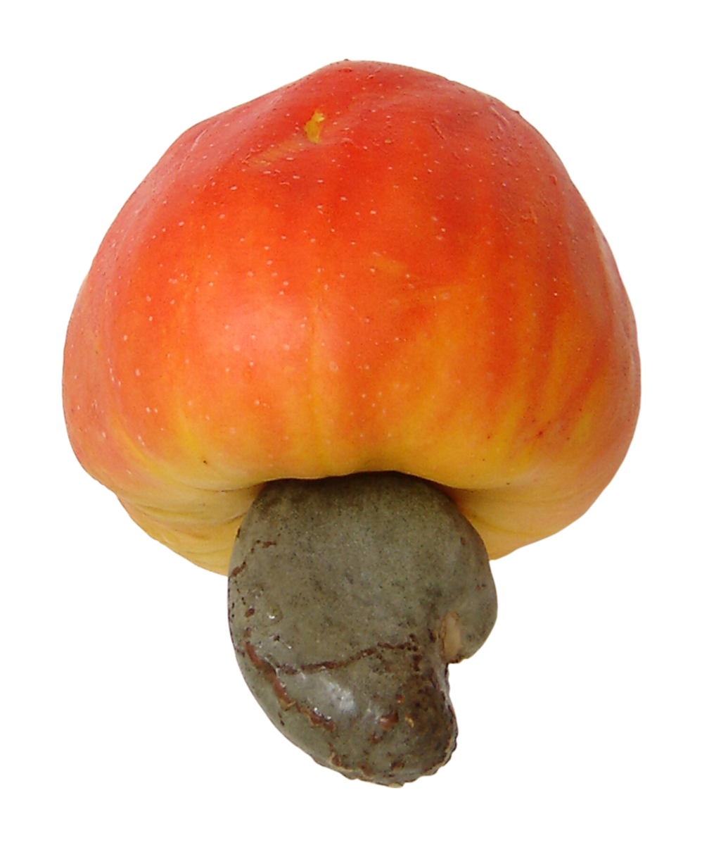 Cashew apple along with the attached cashew nut