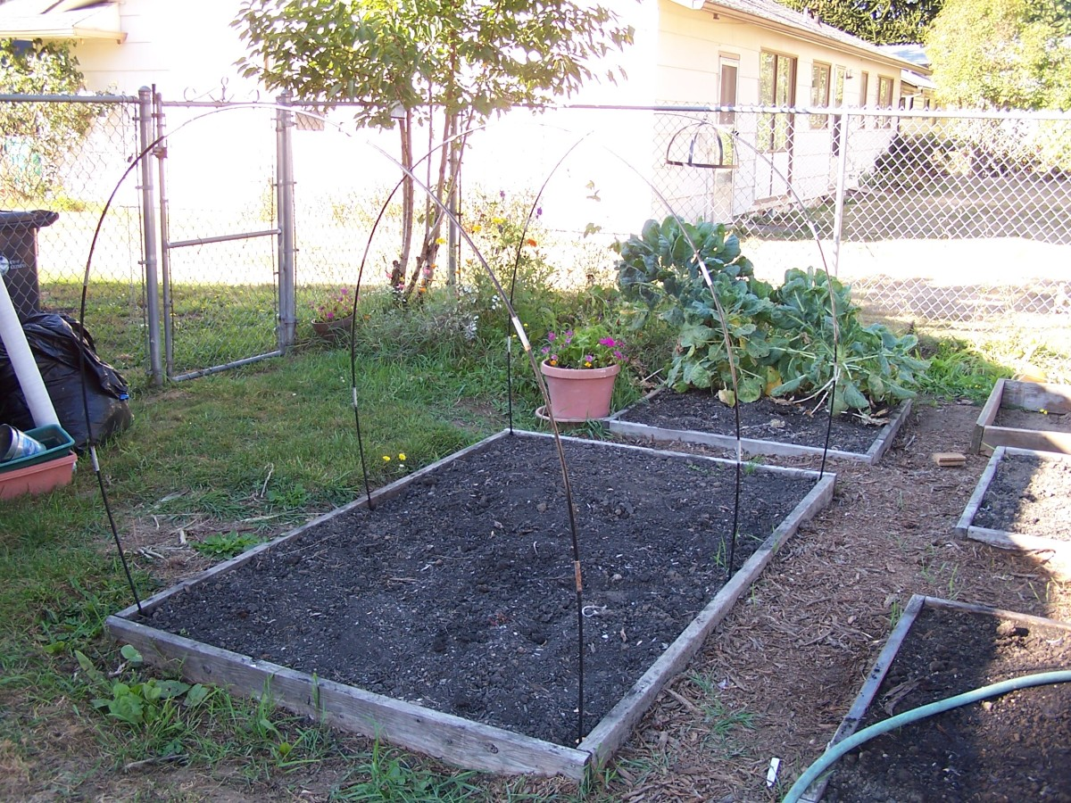 Frugal Greenhouse Designs and Idea