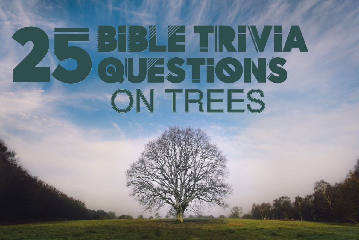 Bible Trivia on Trees (Photo by Luke Richardson)