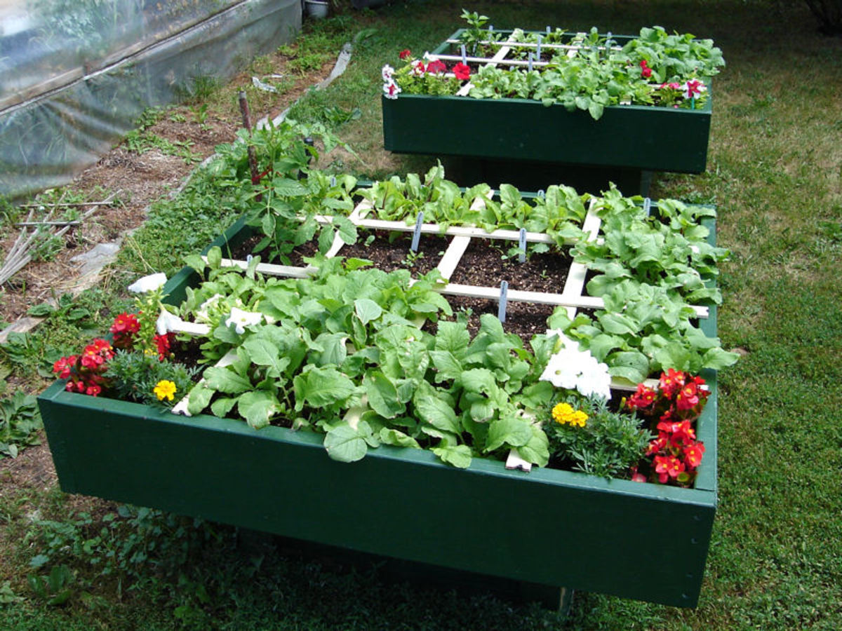 The square foot garden's signature grids make it easy to grow many different crops at once.