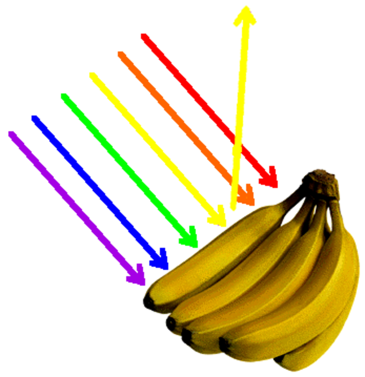 Yellow bananas appear yellow because only yellow wavelengths are reflected into our eyes. All other colour wavelengths are absorbed
