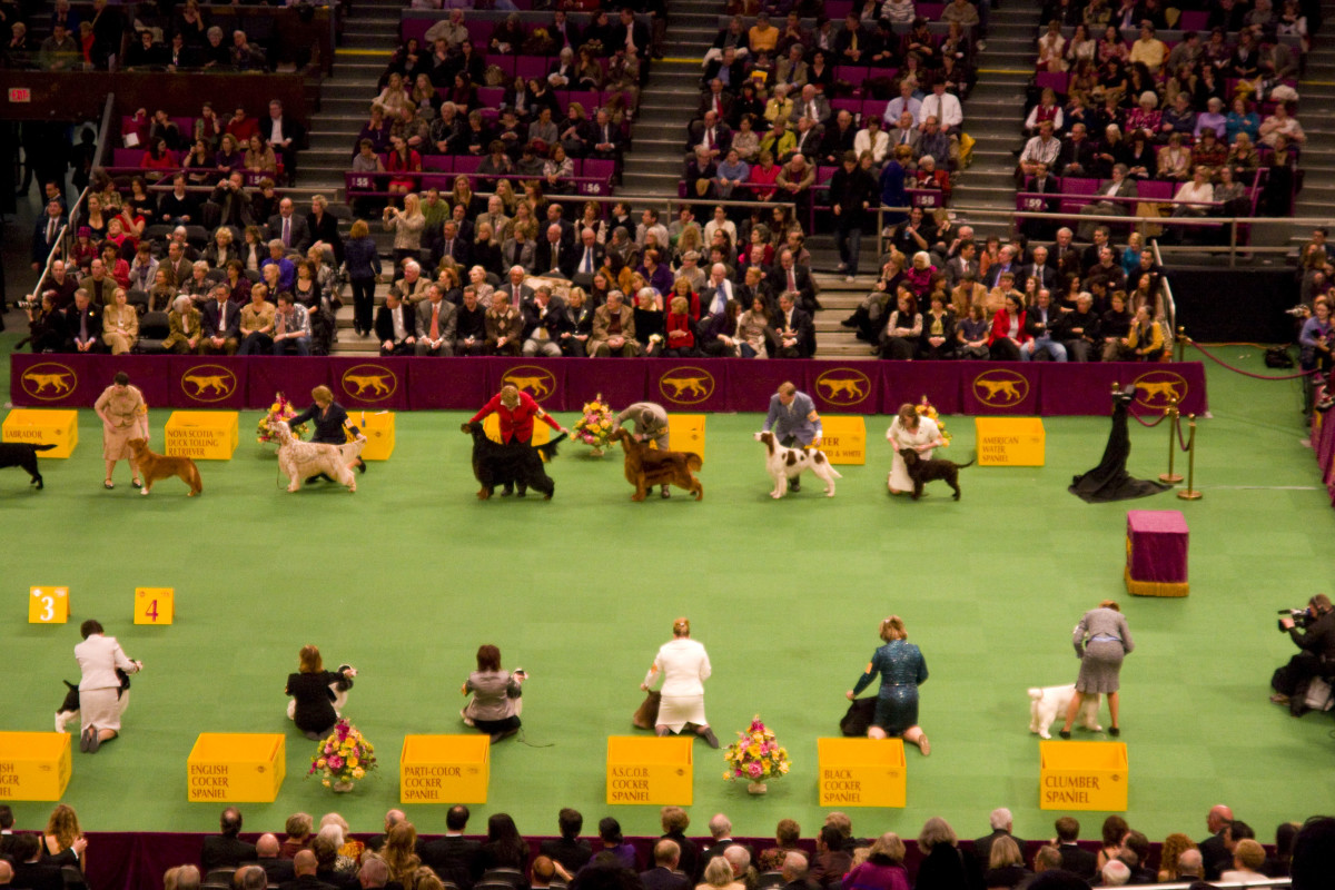 Westminster Kennel Club Dog Show - Madison Square garden