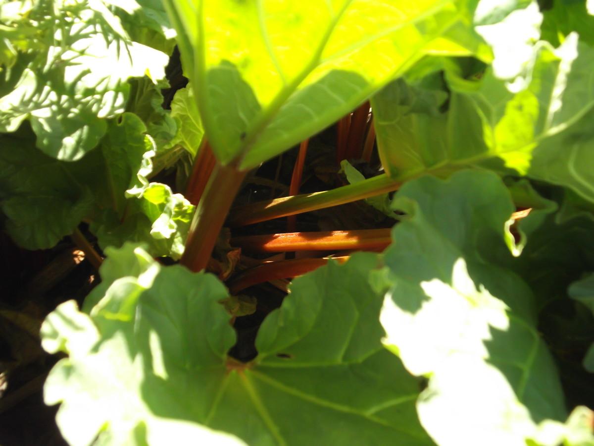 cheap-organic-gardening-tips