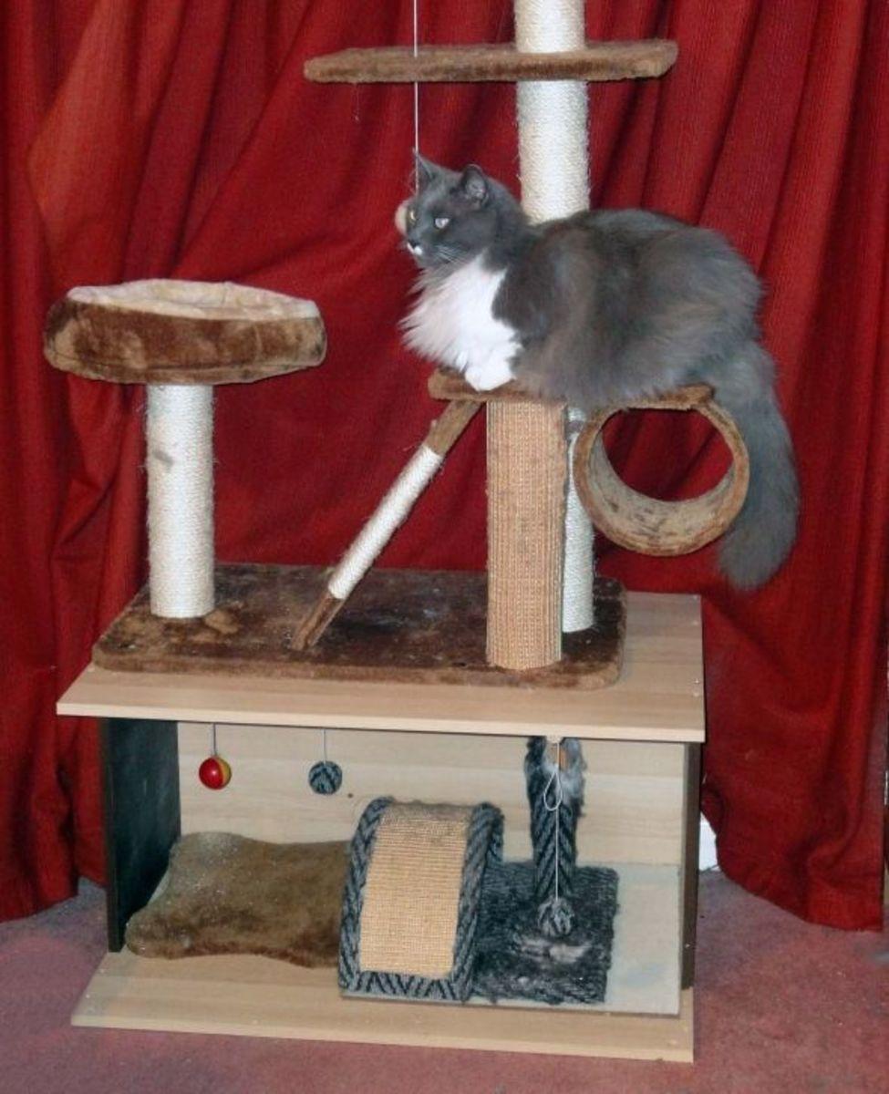 Greebo using cat tree