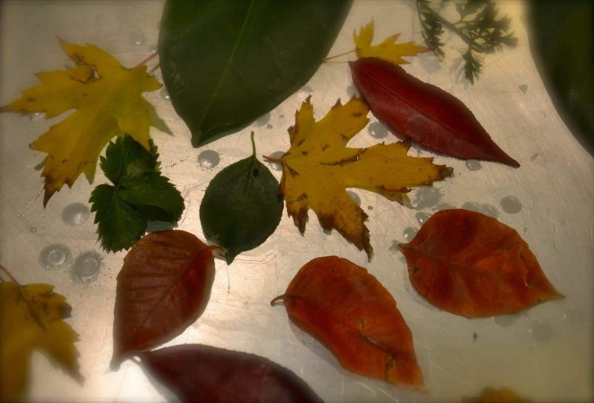 Leaves coated with wax