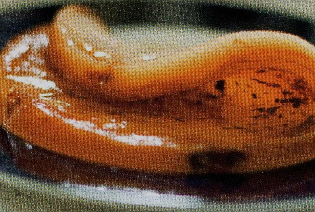 medical-mushrooms-for-health