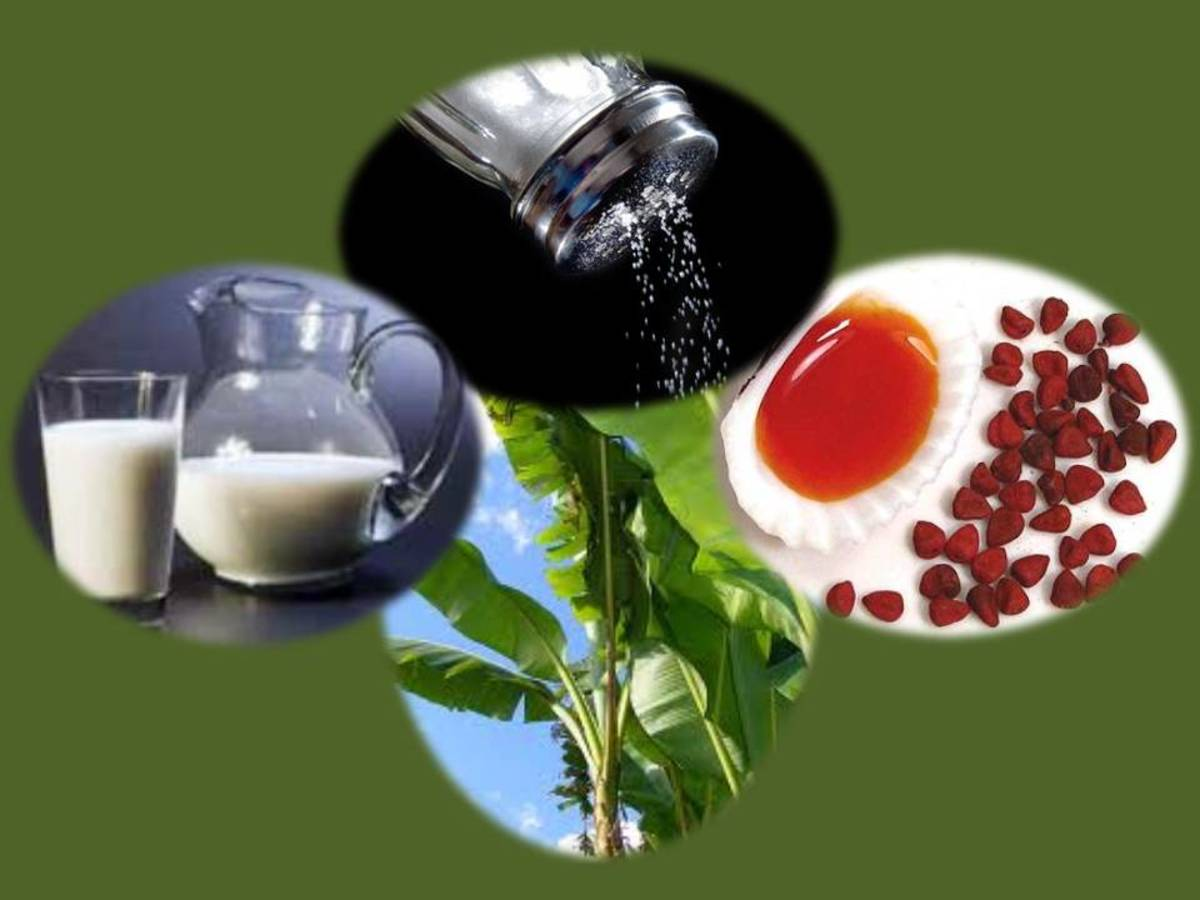 Milk, Salt, Achote (Annatto) oil, Banana leaves