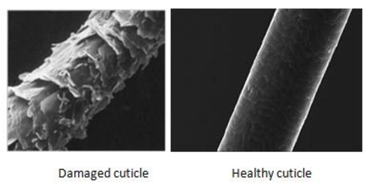 This is a photo of an unhealthy hair strand, next to a healthy hair strand under a microscope.