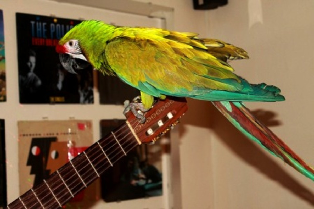 when-a-parrot-refuses-to-step-up