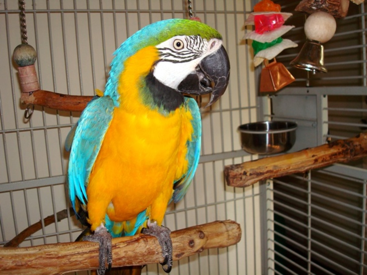 Your parrot will happily perch on any object but not your proffered hand.