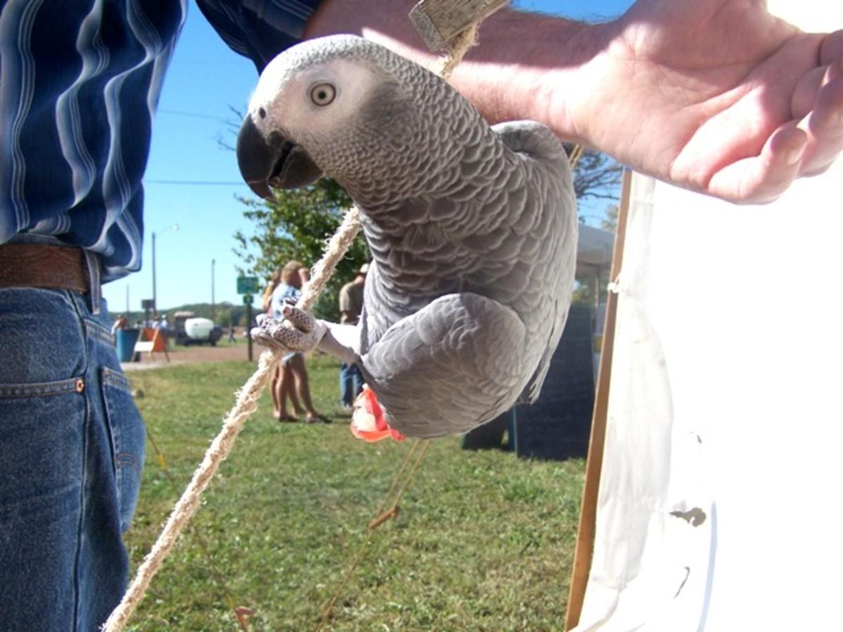 Parrot Uses Avoidance Behavior