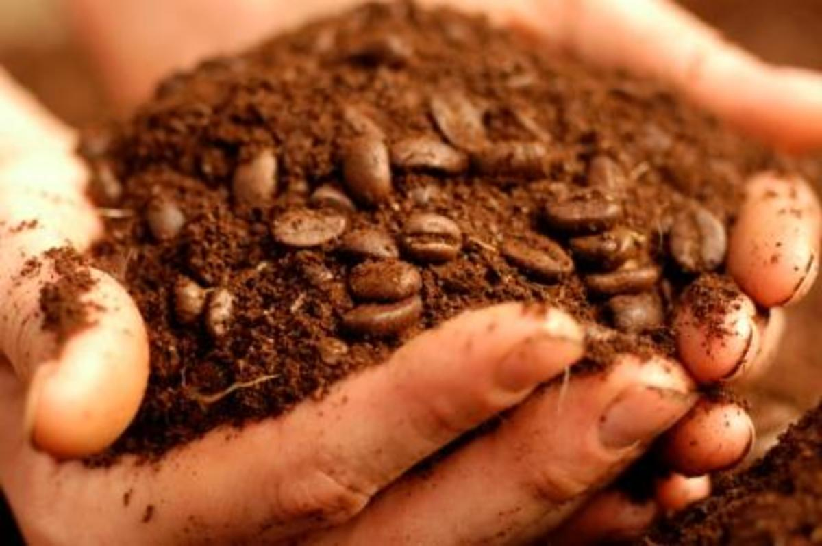 Many Reasons to Love the Uses for Coffee Grounds.