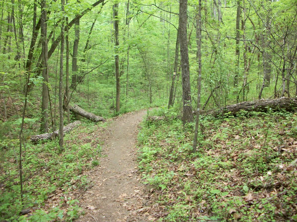 Shady Hollow Trail at McDowell Nature Preserve, Charlotte, NC