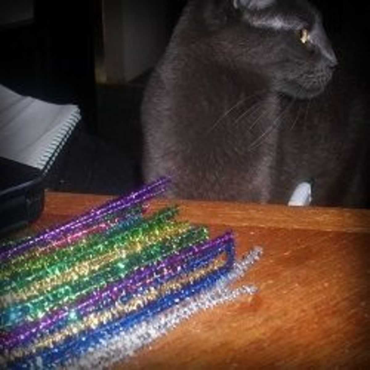 Cat helping me craft with the pipe cleaners
