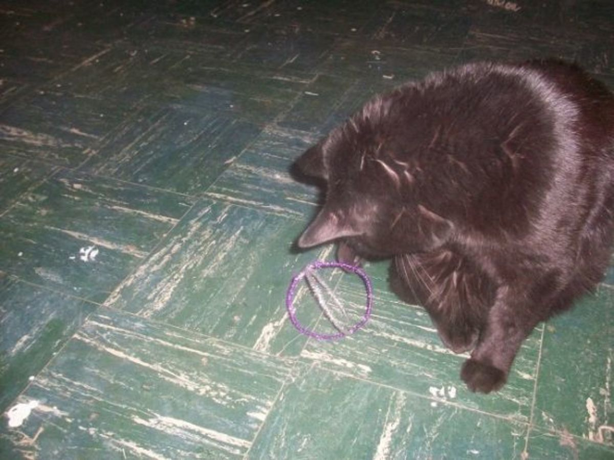 Cat Playing with Homemade Cat Toy