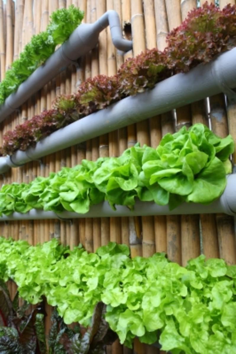 Aquaponics The Ultimate Micro Farming Method