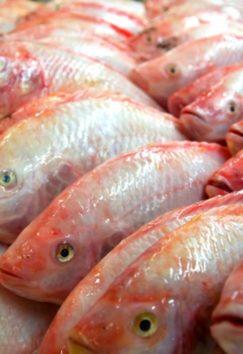 Red tilapia--these are the most common fish choice