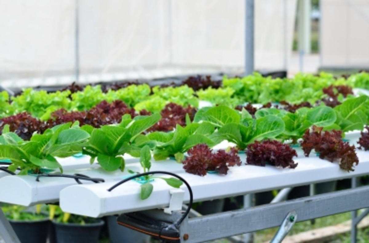 Aquaponics--The Ultimate Micro-Farming Method