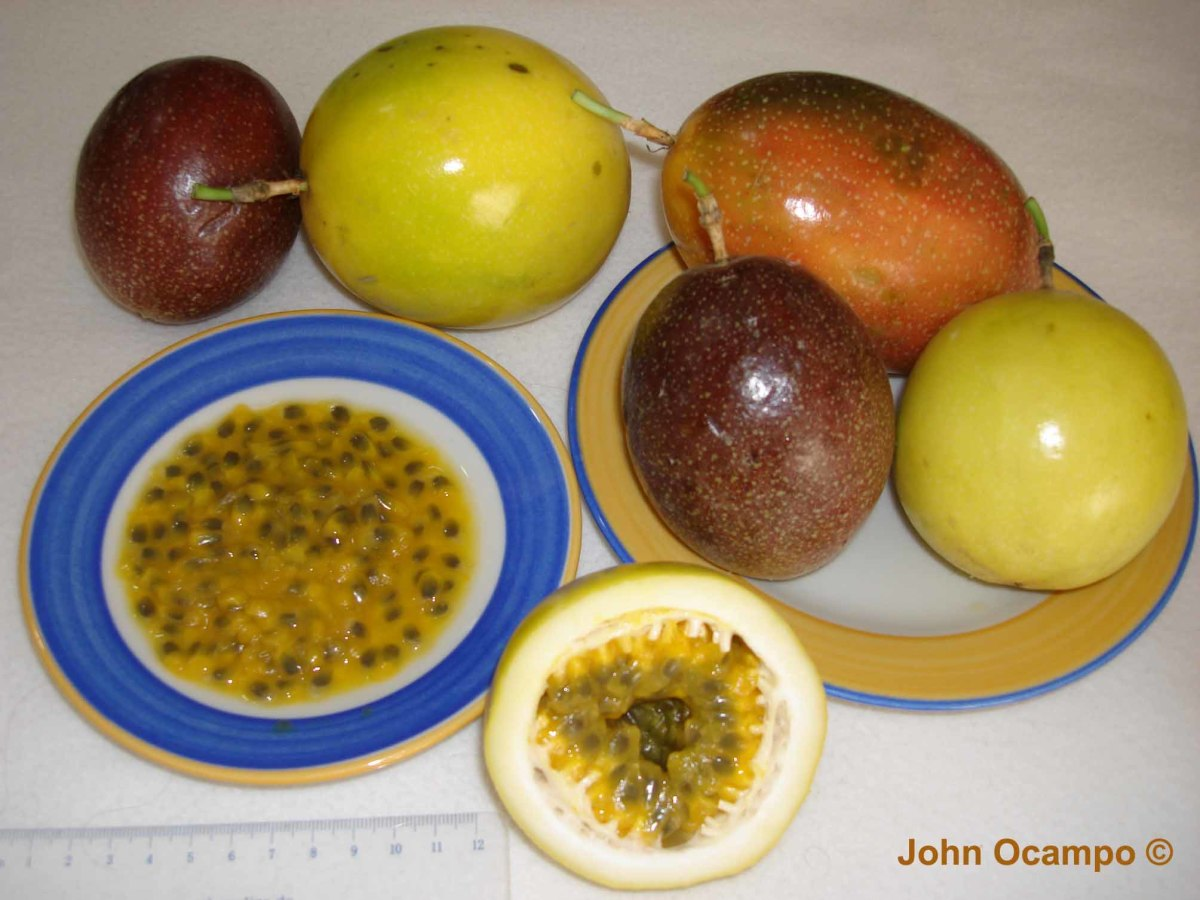 Different varieties of passion fruits and its interior pulp with seeds