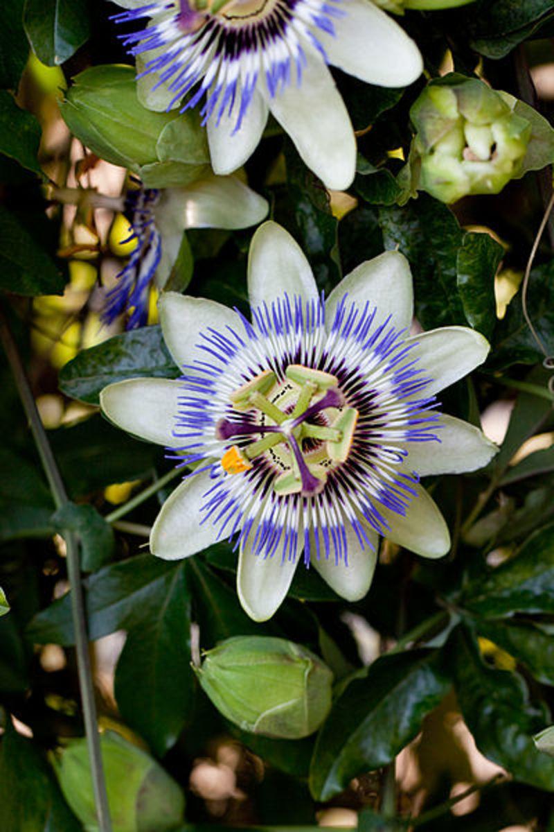Flower via