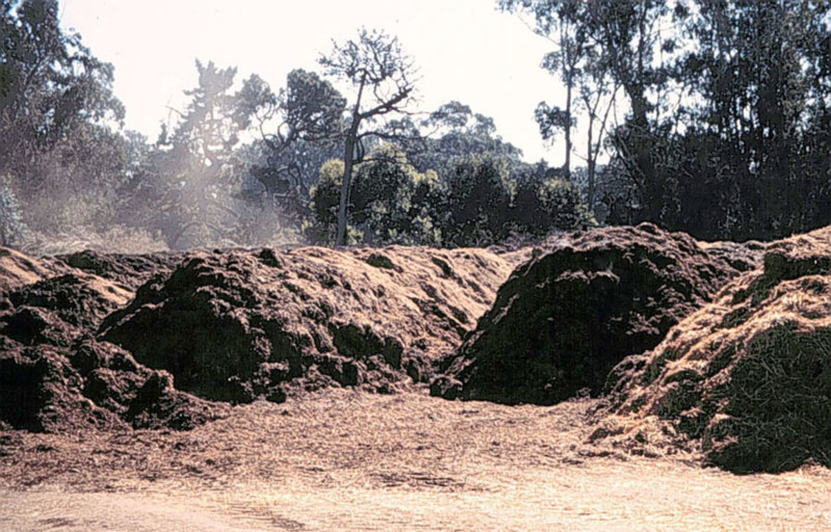 Pictured: Decomposing barnyard manure. Manure that's tainted with the herbicide aminopyralid from Dow AgroScience will ruin your vegetable garden, even if it's composted.