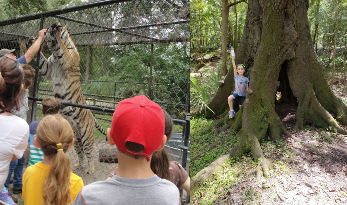 Mystic Jungle & Suwannee River State Park
