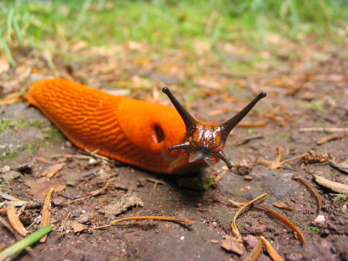 why-slugs-a-short-and-simple-explanation-for-why-slugs-are-beneficial-to-your-garden-and-the-earth