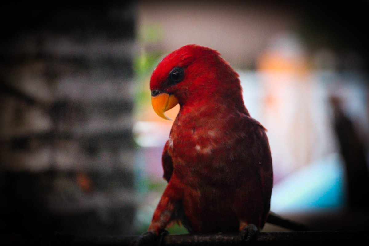 Coolwaves Resort also features a small number of animals we are fond of such as birds!