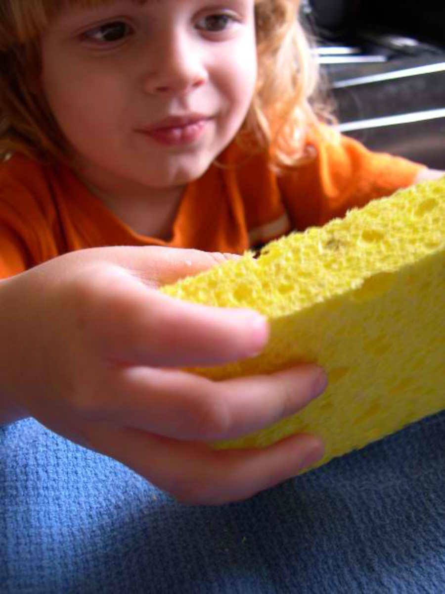 Sponges: Its Importance and General Characteristic as Invertebrate