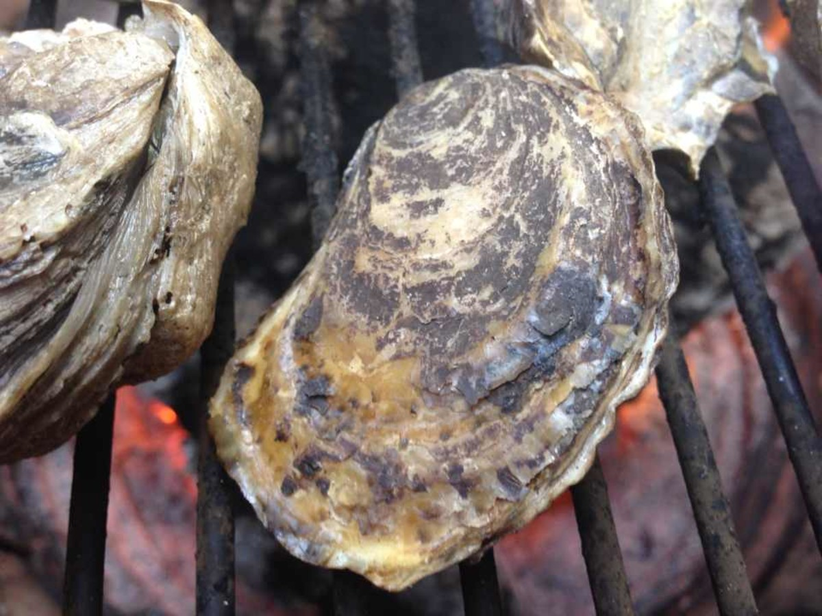 Virginia Bluepoint Oyster in shell on the bbq