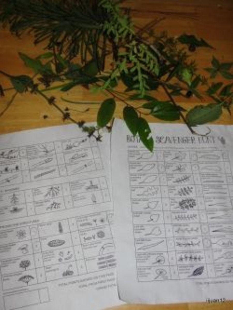 Botany scavenger hunt worksheets and the findings from one group