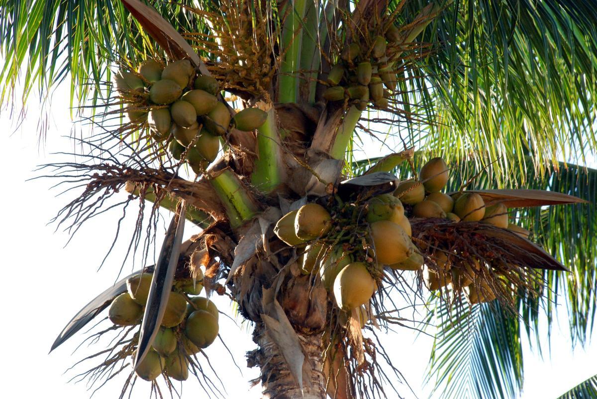 soothing-cucumber-coconut-milk-skin-toner