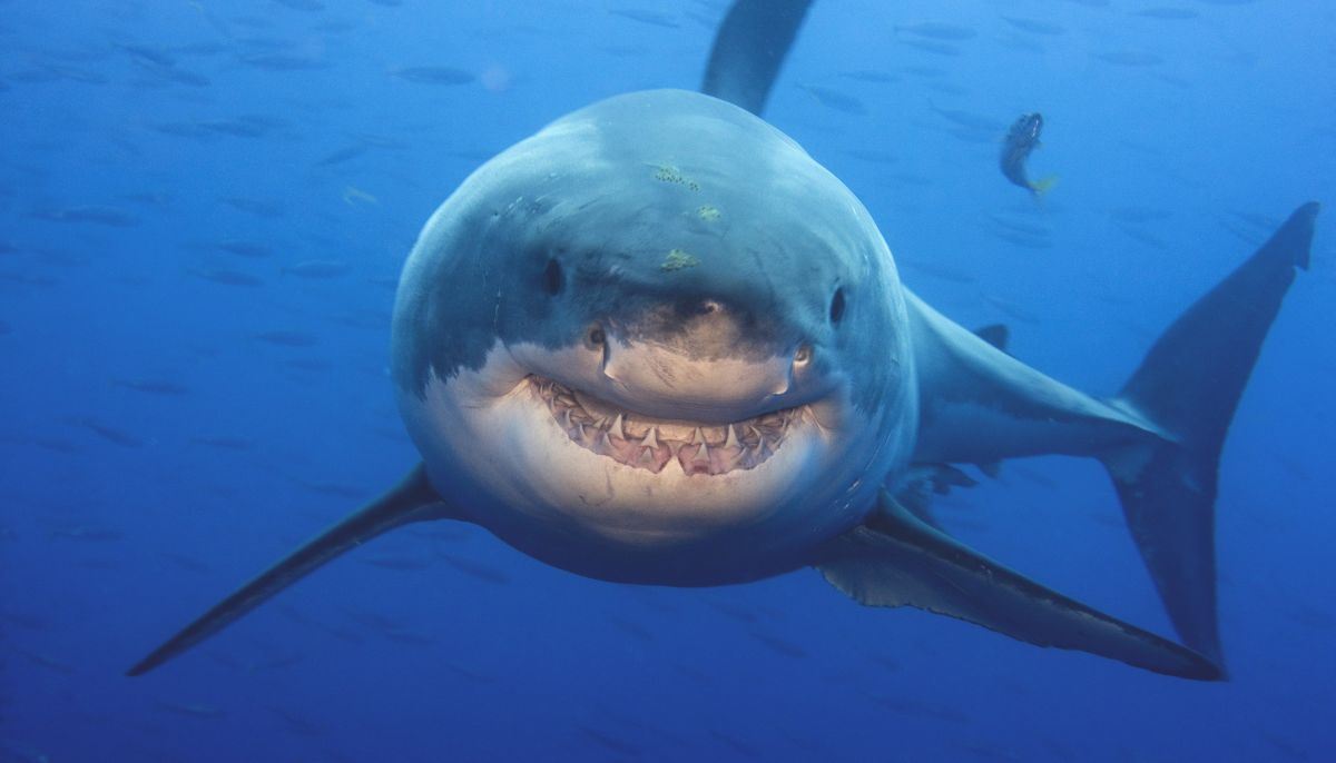 floridas-salt-water-dangerous-creatures
