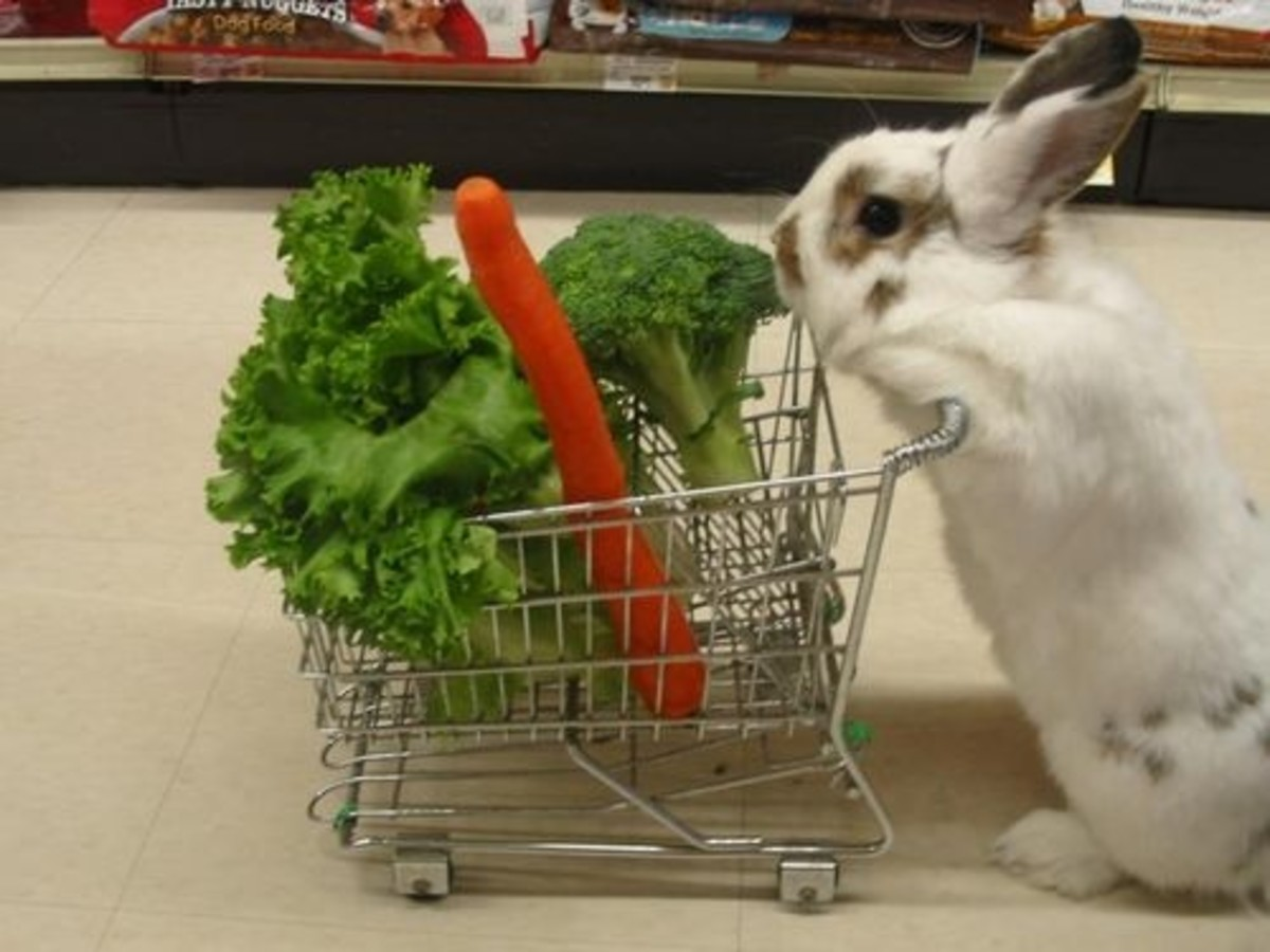 What to Feed Rabbits to Keep Them Healthy